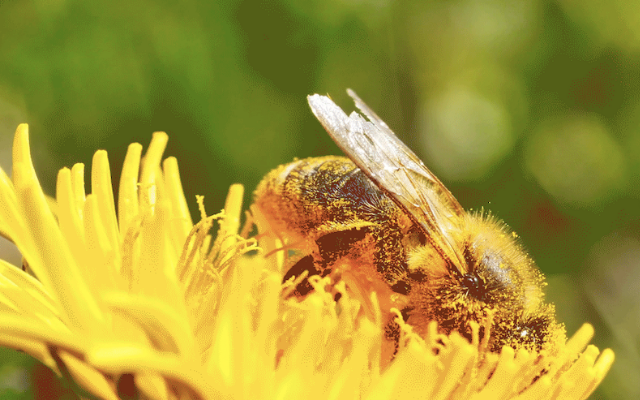 Walmart commits to sourcing from suppliers working to protect pollinators