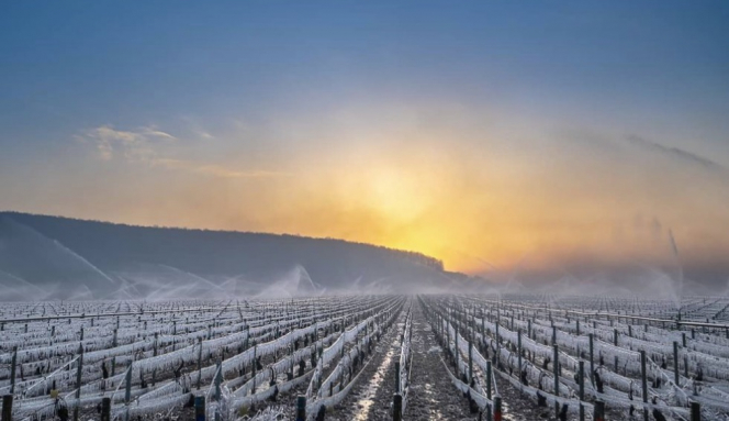 France declares ag disaster after spring frost hits fruit sector