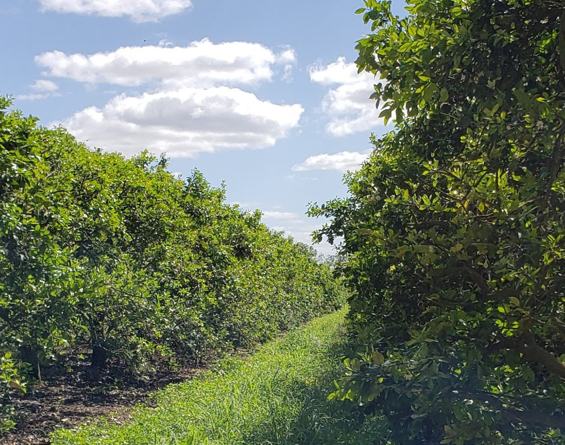 IMG Citrus adds 2,500-acre Florida grove to portfolio