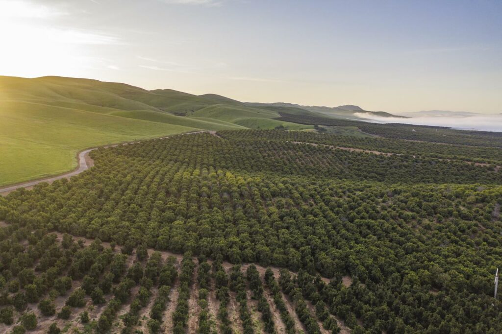 Mission Produce releases inaugural ESG report