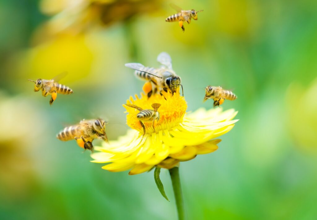 Bayer loses fight over insecticides EU blamed for killing bees