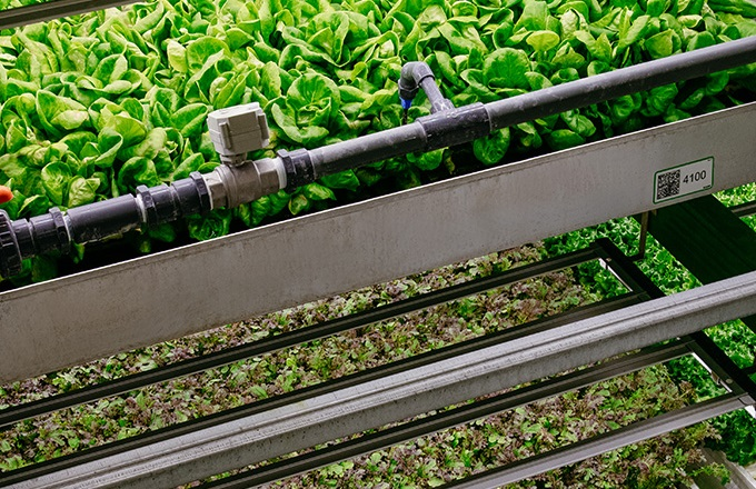 Largest U.S. vertical farm company secures $300M in additional funding