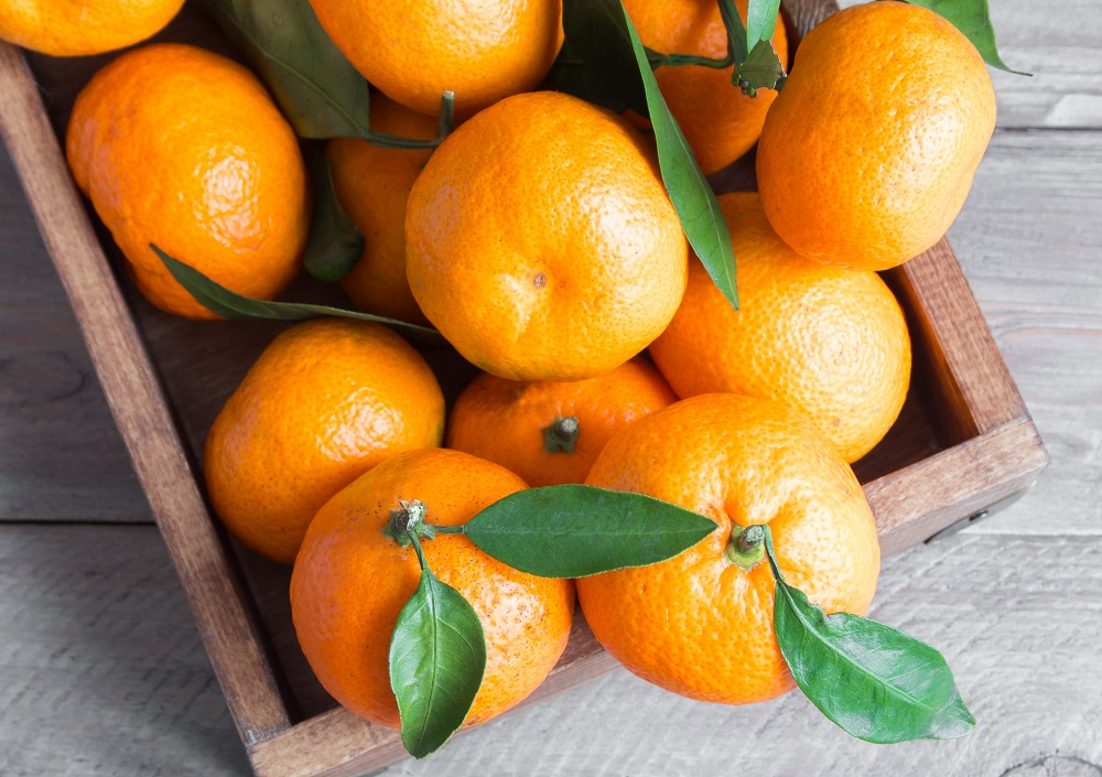 Chile kicks off clementine export season with growth expectations
