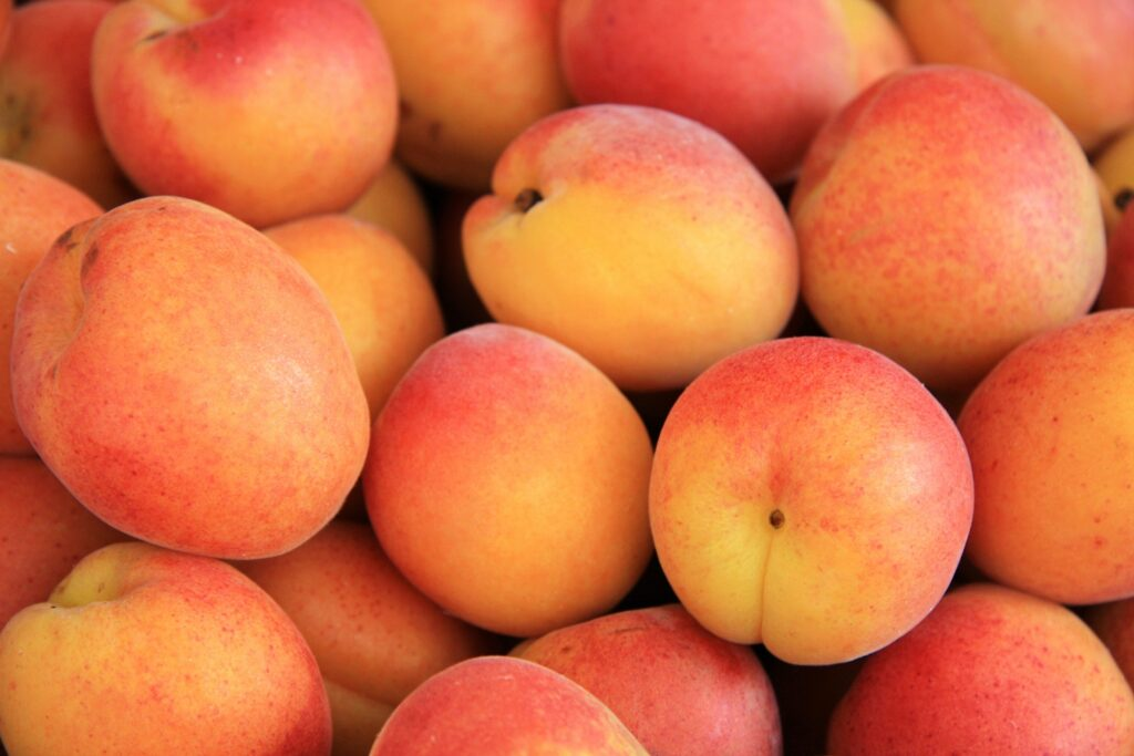EU apricot crop to be lowest in 30 years following spring frosts