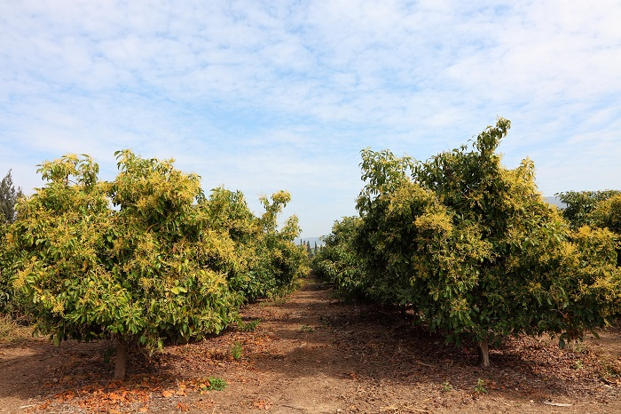 Leading Spanish avocado producer claims record low water use in new project