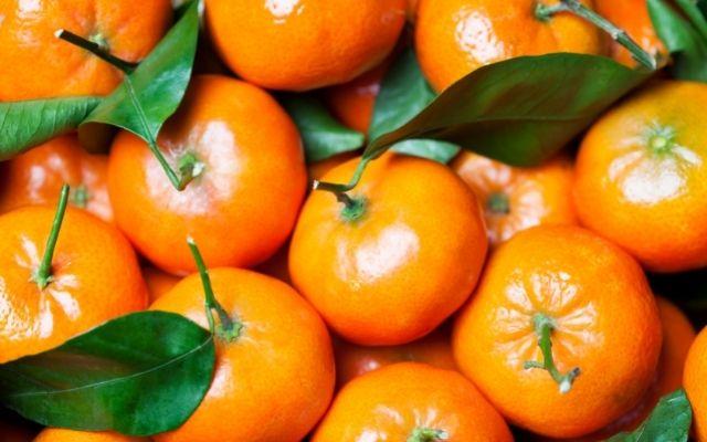 Agronometrics in Charts: Mandarins sweeten Chilean citrus exports