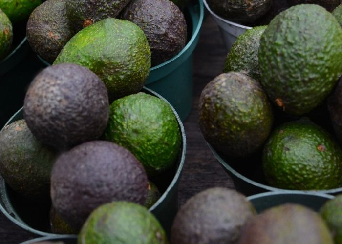 Avocado compound could improve leukemia treatment - study