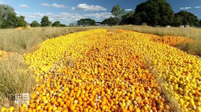 Australian farmers dumping tons of citrus fruit due to labor shortages