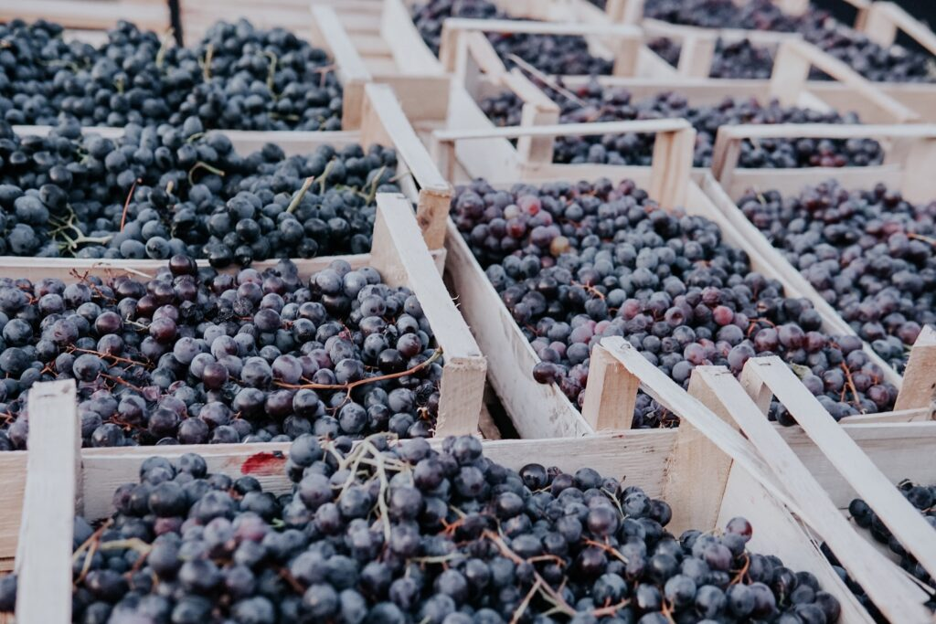 Australian table grapes facing heavy delays entering China