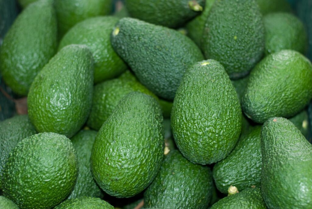 EU avocado market seeing steady volumes this summer