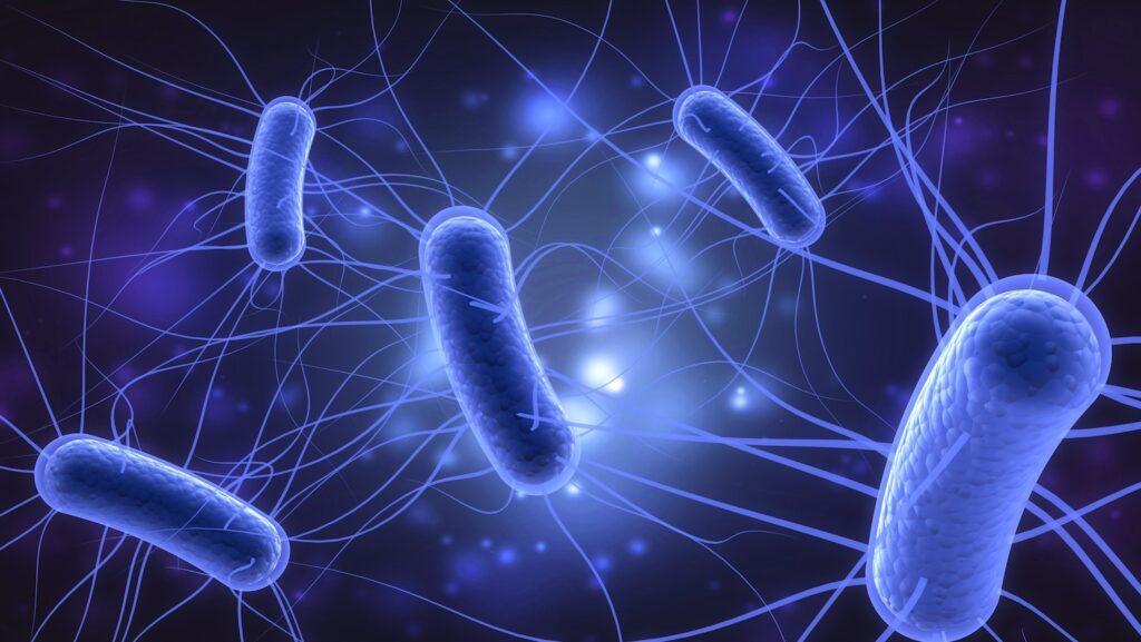 Investigators identify organic produce as possible source for Washington E. coli outbreak
