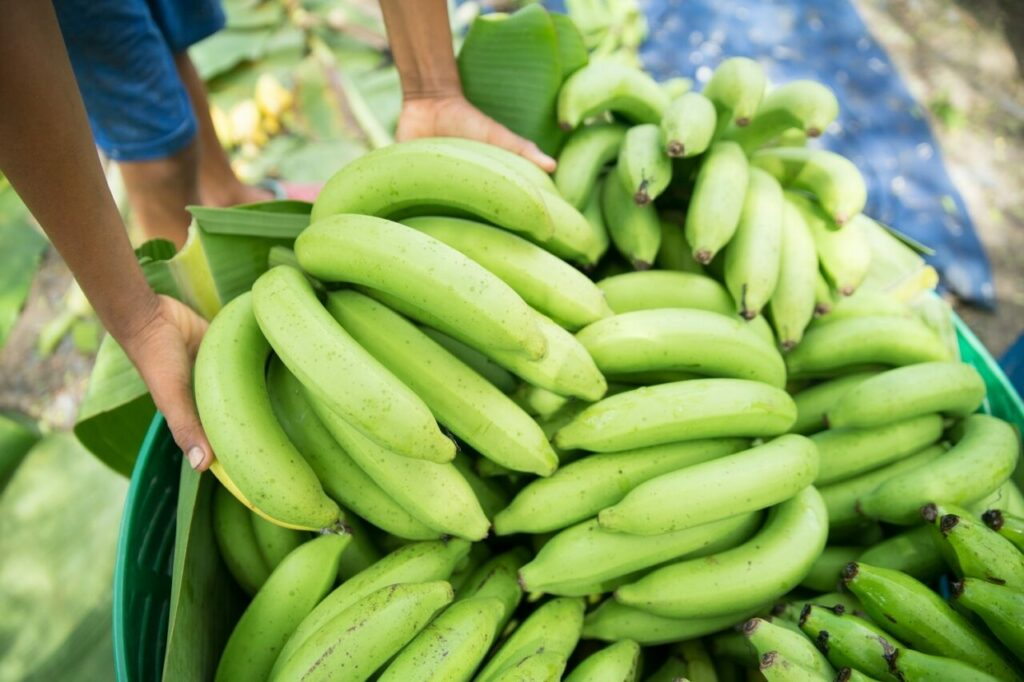 Permanent round table raises hopes for Dominican Republic's banana industry
