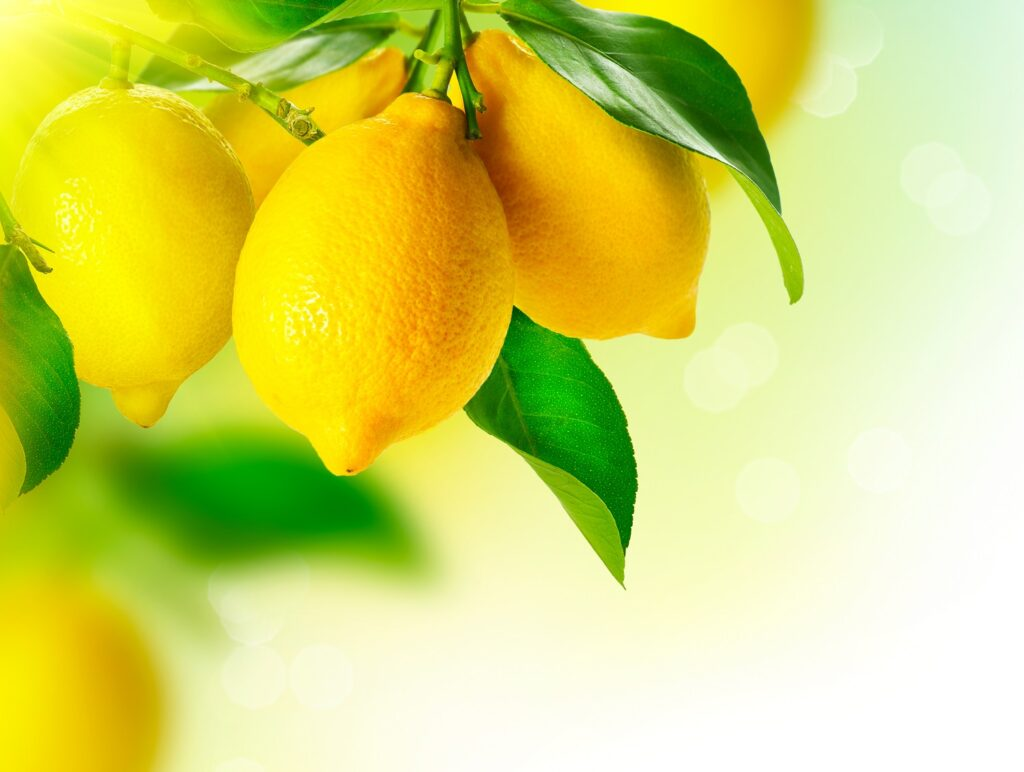First Chilean lemons sent to Asia and U.S.