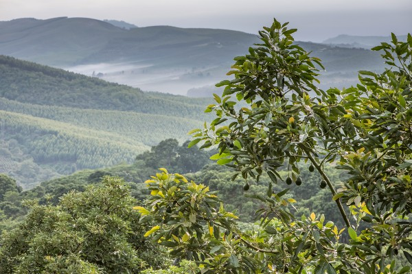 Westfalia Fruit Group illustrates its commitment to sustainability with science-based targets initiative