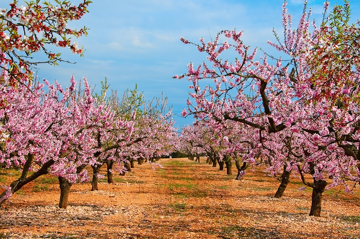California almond shipments set record with two months still left in crop year