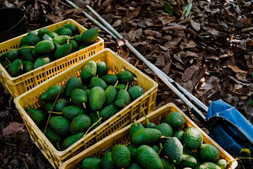 Mexico: Agri-food trade balance hit third-highest level in H1