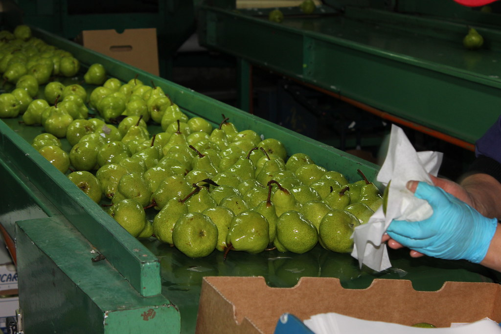 More than half of Chilean fruit producers facing serious labor shortage