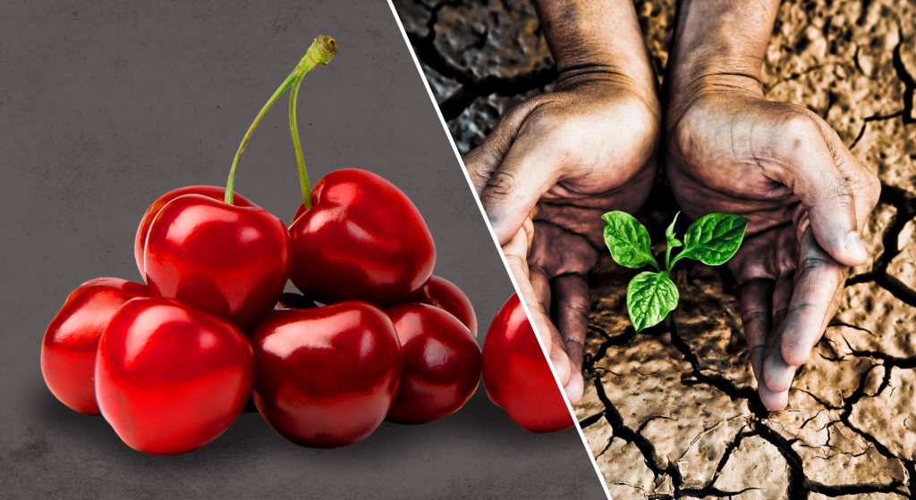 Global Cherry Summit and Agricultural Water Summit postponed until 2022