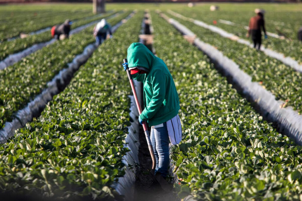 Pacific Northwest heat wave scorches crops, threatens farmworkers - NFU