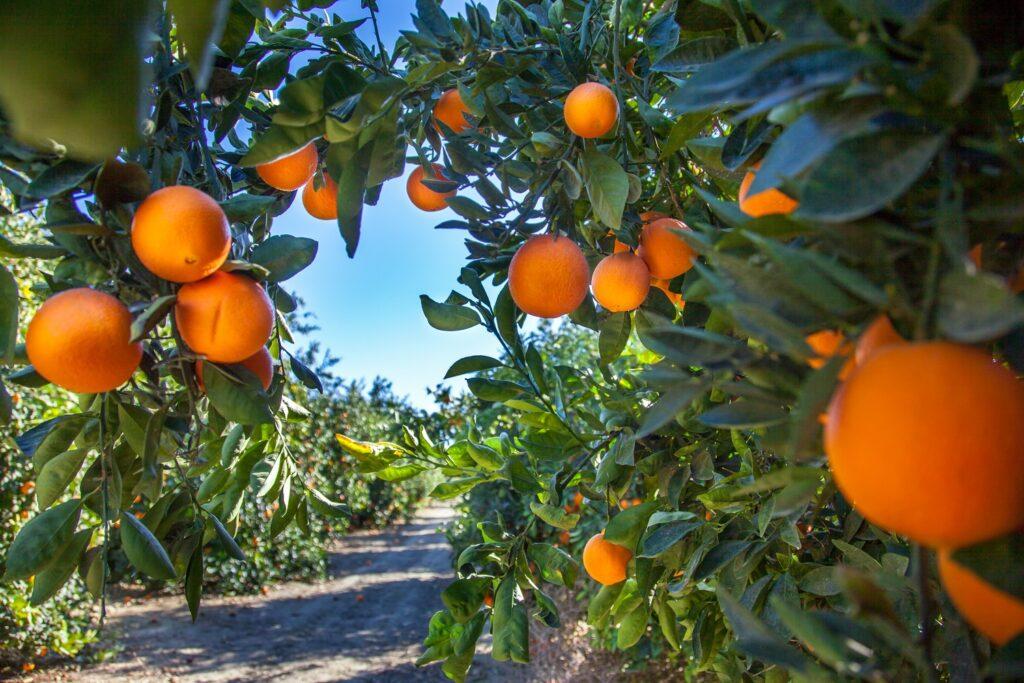 Australia introduces Agriculture visa