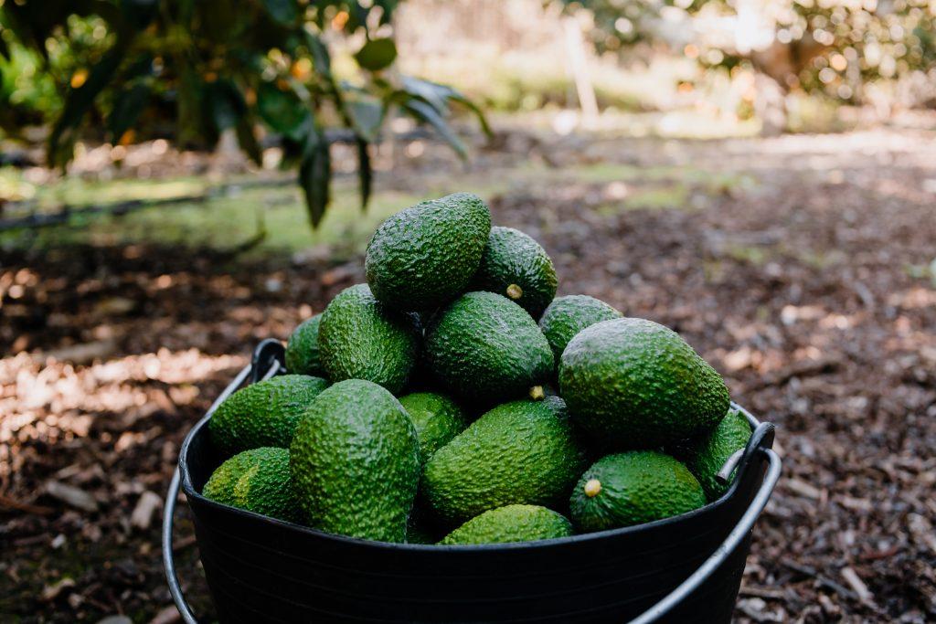 Peruvian avocado exports soared in May