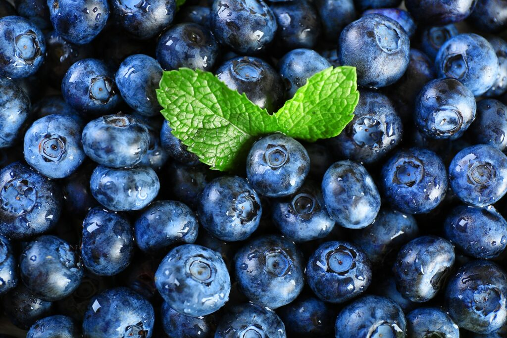 Peruvian blueberry exports forecast to grow by 30% this season