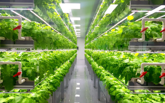 Worldwide vertical farming market to