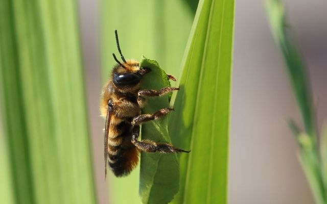 Study finds common insecticide harmful to bees in any amount