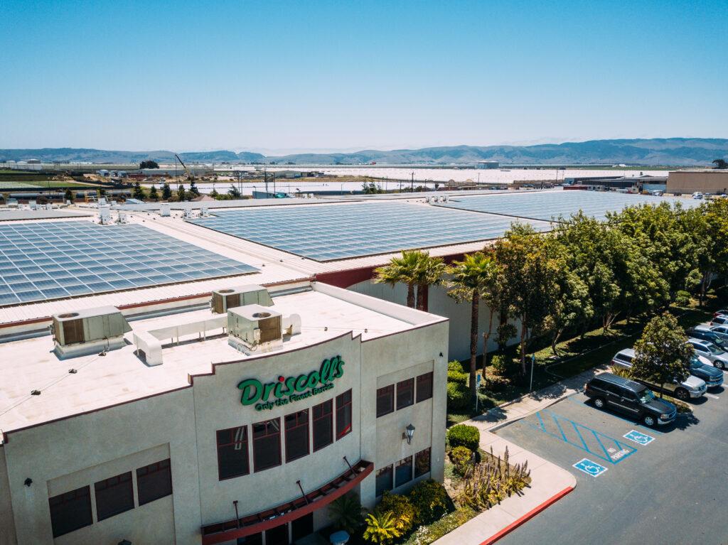 Driscoll's transitions Santa Maria cooling facility to solar
