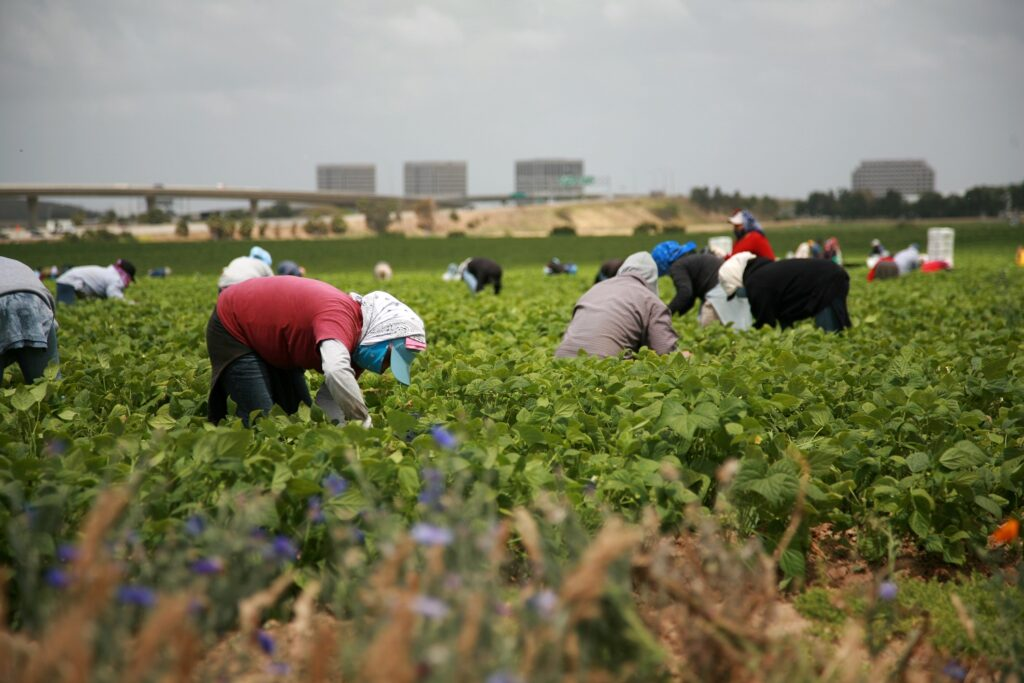 California produce industry applauds governor's veto of ag worker voting bill