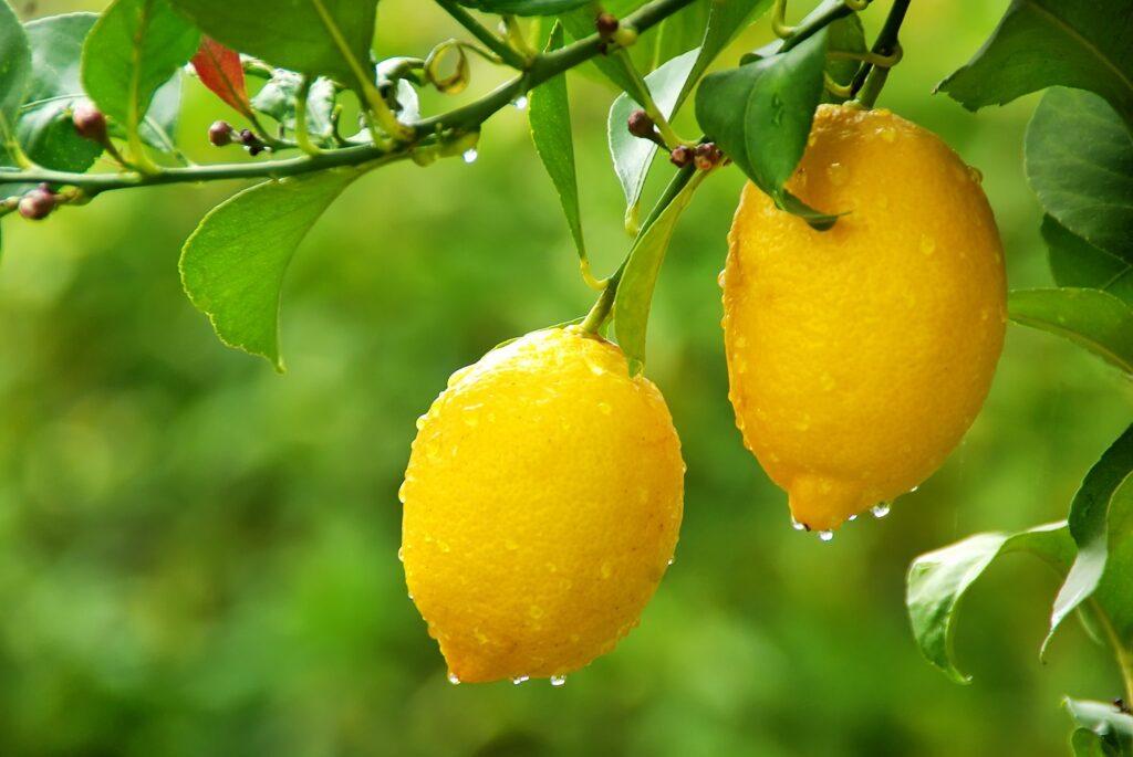 Limoneira announces citrus marketing JV with Wileman Bros. & Elliott