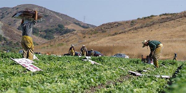 Western Growers slams California Senate's passing of bill that