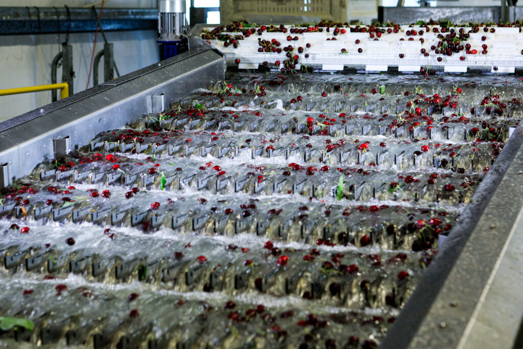 TOMRA Fresh Food appoints Global Category Director for Cherries and announces revolutionary cherry singulator
